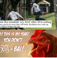 Memes, 🤖, and Api: sir Ris residents 'cry fowl' after AVA culling  ere used to be more than 100 birds. Residents now wake up  a lifeless Sungei Api Api  YOT DONT Wah again?! I just don't understand why AVA hates chickens so much!