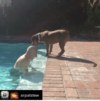 PATRICK STEWART IS FOSTERING A PITBULL AND HIS VIDEOS OF THEM ARE ADORABLE. patrickstewart professorx charlesxavier - Repost from @sirpatstew using @RepostRegramApp - The swimming lesson that wasn't. Our foster pibble Ginger is perfect afternoon company. @ASPCA @WagsandWalks AdoptDontShop pitbullsofinstagram pitbull: sirpatstew PATRICK STEWART IS FOSTERING A PITBULL AND HIS VIDEOS OF THEM ARE ADORABLE. patrickstewart professorx charlesxavier - Repost from @sirpatstew using @RepostRegramApp - The swimming lesson that wasn't. Our foster pibble Ginger is perfect afternoon company. @ASPCA @WagsandWalks AdoptDontShop pitbullsofinstagram pitbull
