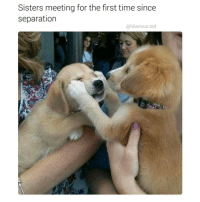 @hilarious.ted is my favorite animal memes page: Sisters meeting for the first time since  separation  @hilarious ted @hilarious.ted is my favorite animal memes page