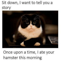 😂😂😂 ComePartyOnaRealPage🎈: Sit down, want to tell you a  Story  Once upon a time, ate your  hamster this morning. 😂😂😂 ComePartyOnaRealPage🎈