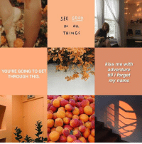 Maura Mood Board — @bournonahil: sit GeoD  IN ALL  THINGS  SEE  GOOD  kiss me with  adventure  till i forget  my name  YOU'RE GOING TO GET  THROUGH THIS.  上Ali Maura Mood Board — @bournonahil