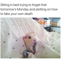 I'm not ready for this shit😐 girlsthinkimfunnytwitter mondayscoming sundayfunday smonday: Sitting in bed trying to forget that  tomorrow's Monday and plotting on how  to fake your own death I'm not ready for this shit😐 girlsthinkimfunnytwitter mondayscoming sundayfunday smonday