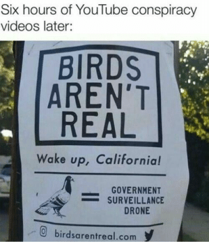 Drone, Videos, and youtube.com: Six hours of YouTube conspiracy  videos later:  BIRDS  AREN'T  REAL  Wake up, California!  GOVERNMENT  -SURVEILLANCE  DRONE  birdsarentreal.com