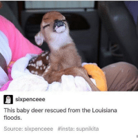 It's just cracked a cold one open with the boys that's why it looks so chill.: Sixpence ee  This baby deer rescued from the Louisiana  floods.  Source: sixpenceee #insta: supnikita It's just cracked a cold one open with the boys that's why it looks so chill.