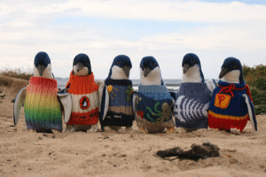 Tumblr, Blog, and Date: sixpenceee:109-year-old Australian Alfred Date has been knitting since the 1930s and his latest endeavor was making mini sweaters for endangered penguins
