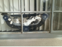 sixpenceee:   A hammock for a cat!(Source) : sixpenceee:   A hammock for a cat!(Source)