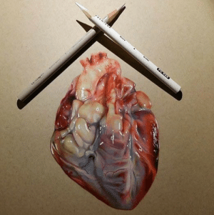 Reddit, Tumblr, and Blog: sixpenceee: A realistic drawing of a human heart. (Source)