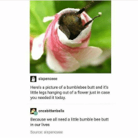 This is for @a.simple.bee ~ Kay: sixpenceee  Here's a picture of a bumblebee butt and it's  little legs hanging out of a flower just in case  you needed it today.  oncebittenbella  Because we all need a little bumble bee butt  in our lives  Source: sixpenceee This is for @a.simple.bee ~ Kay