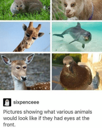 Yowzers: sixpenceee  Pictures showing what various animals  would look like if they had eyes at the  front. Yowzers