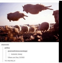 They fly | (Check link in bio!) funnyfriday funnytumblr tumblr funny tumblrtextpost funnytumblrtextpost funny haha humor hilarious: sixpennies  gelfling  Icelandic sheep  Where are they GOING  TO VALHALLA They fly | (Check link in bio!) funnyfriday funnytumblr tumblr funny tumblrtextpost funnytumblrtextpost funny haha humor hilarious
