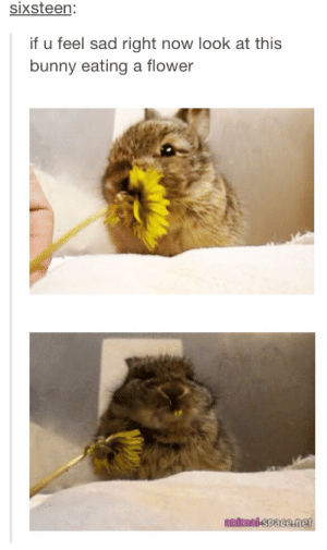 cutest find of the dayomg-humor.tumblr.com: sixsteen:  if u feel sad right  now look at this  bunny eating a flower  antmal-space.met cutest find of the dayomg-humor.tumblr.com