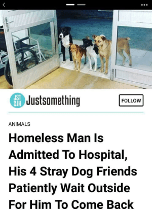 awesomacious:  Four good bois waiting for their friend: SJustsomething  FOLLOW  ANIMALS  Homeless Man Is  Admitted To Hospital,  His 4 Stray Dog Friends  Patiently Wait Outside  For Him To Come Back awesomacious:  Four good bois waiting for their friend