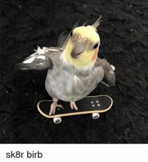 She, She Said, and  See: sk8r birb he was a sk8r birb she said see ya l8r birb