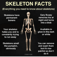 Dank, Facts, and Run: SKELETON FACTS  (Everything you need to know about skeletons)  Skeletons have  permanent  boners  Gary Busey  removes his at  night and turns  into a blob  Your skeleton  hates you and is  constantly trying  to run away  Available in  glow-in-the-dark  or white  Skeletons smell  like pumpkin,  obviously  You can remove  and wash them  but it's too  painful so don't  do it  FUNNYSDIE Only real skeleton fans will know these facts