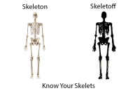 skeleton: Skeleton  Skeletoff  Know Your Skelets