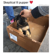 "Fuckboy, Lawyer, and Memes: Skeptical lil pupper  @Dr Smashlove This skeptical pupper is every girl I've ever been on a date with. Girl: ""You seem like you're not ready for a relationship. You seem focused on work. Why haven't any of your relationships worked. You seem emotionally broken. Also, you seem like a fuckboy who's self aware enough to know you're a fuckboy and therefore you're intelligent enough to mask it. I'm not gonna lie, everything about you is a red flag."" Me: ""Baby girl you strike me as suspicious, paranoid, bipolar, stressed, and anxious, and, judging by the mild twitch in your eye, it's safe to say that you have violent tendencies. Basically, this forcefield you've constructed around you make my PP hard, but if you lower it and let me in, we have a strong possibility of an extremely sexual and sensual relationship that ends in broken glass, cop cars, restraining orders, expensive Jewish lawyers, and long custody battles, but it will have all been delightfully worth it. WAITER!! Two more Dark and Stormies please ☺️."" 🍻 CheersToThat HeresToNewSituationships EyesWideOpen LoveMeNowStabMeLater 😍😂😂😂"