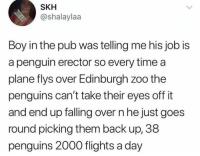 Dank, Penguin, and Penguins: SKH  @shalaylaa  Boy in the pub was telling me his job is  a penguin erector so every time a  plane flys over Edinburgh zoo the  penguins can't take their eyes off it  and end up falling over n he just goes  round picking them back up, 38  penguins 2000 flights a day