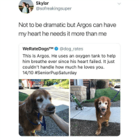 Don't follow @no_chillbruh if you're easily offended 🔥🔥: Skylar  @sofreakingsuper  Not to be dramatic but Argos can have  my heart he needs it more than me  WeRateDogsTM@dog rates  This is Argos. He uses an oxygen tank to help  him breathe ever since his heart failed. It just  couldn't handle how much he loves you.  14/10 Don't follow @no_chillbruh if you're easily offended 🔥🔥
