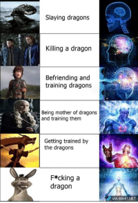 bulletballismylife: This must be my favorite meme of 2017. Or ever.: Slaying dragons  Killing a dragon  Befriending and  training dragons  Being mother of dragons  and training them  Getting trained by  the dragons  F*cking a  dragon  P VIA 8SHIT.NET bulletballismylife: This must be my favorite meme of 2017. Or ever.