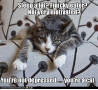 Grumpy Cat, Sleep, and Depressed: Sleep a lot Finicky eater  NotVery motivated  You're not depressed ooyoureacat