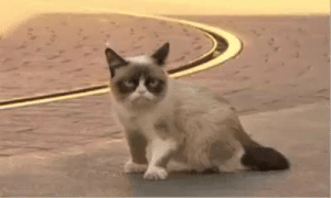 Grumpy Cat, Sleep, and Cat: Sleep tight Grumpy cat