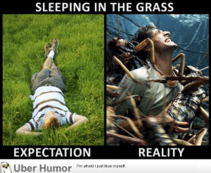 failnation:  It always seem like such a good idea at first: SLEEPING IN THE GRASS  EXPECTATION  REALITY  I'm afraid I just blue myself  Uber Humor failnation:  It always seem like such a good idea at first