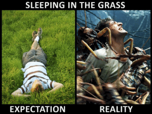 It always seems like such a good idea at first: SLEEPING IN THE GRASS  EXPECTATION  REALITY It always seems like such a good idea at first
