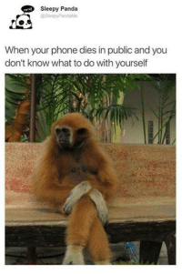 Memes, Phone, and Panda: Sleepy Panda  @Sleepy PandaMe  When your phone dies in public and you  don't know what to do with yourself