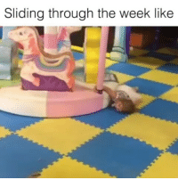 @beentheretho it's only Wednesday, its only fucking Wednesday!! 😩😡 Follow @beentheretho @beentheretho 👈 my_mom_says_im_pretty noharmdone teamnoharmdone: Sliding through the week like @beentheretho it's only Wednesday, its only fucking Wednesday!! 😩😡 Follow @beentheretho @beentheretho 👈 my_mom_says_im_pretty noharmdone teamnoharmdone