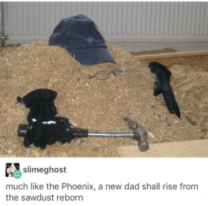 Dad, Phoenix, and Reborn: slimeghost  much like the Phoenix, a new dad shall rise from  the sawdust reborn He will rise again.