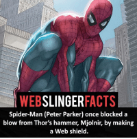 ▲▲ - Web Shield! - My other IG accounts @factsofflash @yourpoketrivia @facts_of_heroes ⠀⠀⠀⠀⠀⠀⠀⠀⠀⠀⠀⠀⠀⠀⠀⠀⠀⠀⠀⠀⠀⠀⠀⠀⠀⠀⠀⠀⠀⠀⠀⠀⠀⠀⠀⠀ ⠀⠀----------------------- spiderman peterparker tomholland marvelfacts spidermanfacts webslingerfacts venom carnage avengers xmen justiceleague marvel homecoming tobeymaguire andrewgarfield ironman spiderman2099 civilwar auntmay like gwenstacy maryjane deadpool miguelohara hobgoblin milesmorales like4like: SLINGER  FACTS  WEB  Spider-Man (Peter Parker) once blocked a  blow from Thor's hammer, Mjolnir, by making  a Web shield. ▲▲ - Web Shield! - My other IG accounts @factsofflash @yourpoketrivia @facts_of_heroes ⠀⠀⠀⠀⠀⠀⠀⠀⠀⠀⠀⠀⠀⠀⠀⠀⠀⠀⠀⠀⠀⠀⠀⠀⠀⠀⠀⠀⠀⠀⠀⠀⠀⠀⠀⠀ ⠀⠀----------------------- spiderman peterparker tomholland marvelfacts spidermanfacts webslingerfacts venom carnage avengers xmen justiceleague marvel homecoming tobeymaguire andrewgarfield ironman spiderman2099 civilwar auntmay like gwenstacy maryjane deadpool miguelohara hobgoblin milesmorales like4like