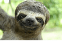 Sloths have a horrible fashion sense and poor hygiene. Often, the results resemble a bowl cut and long finger nails.: Sloths have a horrible fashion sense and poor hygiene. Often, the results resemble a bowl cut and long finger nails.