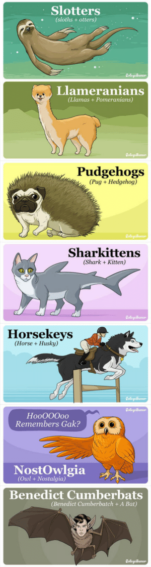 lolzandtrollz:  Animals That Would Break The Internet If They Existed: Slotters  (sloths + otters)  CollegaHumon  Llameranians  (Llamas+Pomeranians)  CollegeMumon  Pudgehogs  (Pug Hedgehog)  Collegeiumo  Sharkittens  (Shark Kitten)  CollegeHumor  Horsekeys  (Horse Husky)  Collegeumon  CollegeHumon  HooO00o0  Remembers Gak?  NostOwlgia  (Owl+ Nostalgia)  Benedict Cumberbats  (Benedict Cumberbatch + A Bat)  CollegetHumon lolzandtrollz:  Animals That Would Break The Internet If They Existed