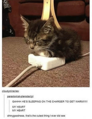 Heart, Sleeping, and Charger: sloudymiracles:  paradoxical-pterodactyl  GAHHH HE'S SLEEPING ON THE CHARGER TO GET WARM!!!!  MY HEART  MY HEART  ohmygoodness, that's the cutest thing I ever did see