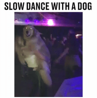 Even dogs need a night out sometimes 😂🐕 @bandanajax: SLOW DANCE WITH A DOG Even dogs need a night out sometimes 😂🐕 @bandanajax
