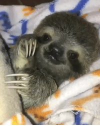 Slow Motion, Sloth, and Baby: Slow motion capture