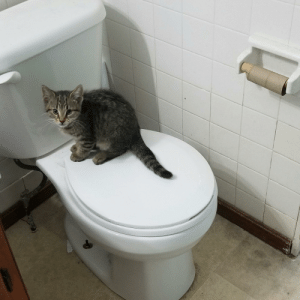 Cool, Water, and Air: SLPT: out of toilet paper? Fret not, simply use the kitten. Its soft and can be washed and reused. (CAUTION: only wash on a delicate cycle with cool water and let air dry). Fabric softener is recommended.