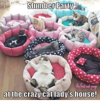 Memes, 🤖, and The Crazies: Slumber Party  at the  crazy cat lady's house!