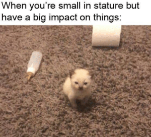 Small but mighty: Small but mighty