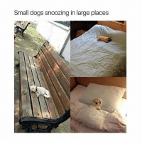 Dogs, Memes, and 🤖: Small dogs snoozing in large places send more pls