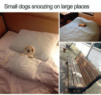 Dogs,  Large, and  Comfy: Small dogs snoozing on large places So comfy