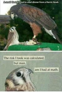 I'm not good at math... https://9gag.com/gag/am7qZjo/sc/funny?ref=fbsc: small Kestrel tried to steal dinner from a Harris Hawk  The risk I took was calculated  but man  am I bad at math I'm not good at math... https://9gag.com/gag/am7qZjo/sc/funny?ref=fbsc