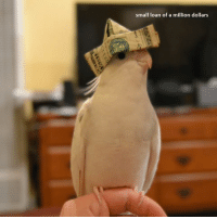 Life, Money, and Been: small loan of a million dollars this is a money birb like the pic and comment down ''life has not been easy for me'' to receive small loan of a million dollars