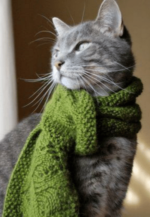 Cold, Cat, and Smart: Smart cat in cold