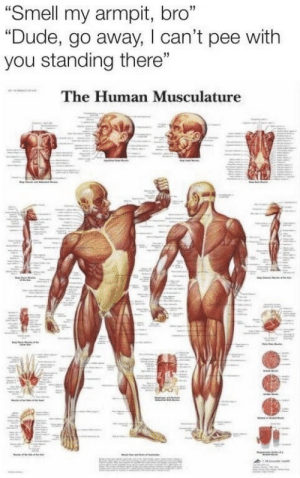 "Dude, Smell, and Armpit: ""Smell my armpit, bro""  ""Dude, go away, lcan't pee with  you standing there""  The Human Musculature"