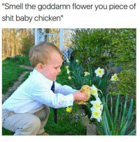 "Memes, Shit, and Smell: ""Smell the goddamn flower you piece of  shit baby chicken"" @donny.drama is one of my favourite accounts right now!!"