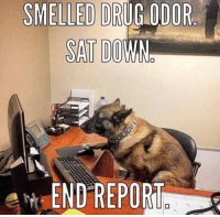 48 Funniest Animal Photos That Will Make You Laugh No Matter What: SMELLED DRUG ODOR  SAT DO  Art-END REPORu 48 Funniest Animal Photos That Will Make You Laugh No Matter What