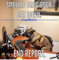 America, Memes, and Police: SMELLED DRUG ODOR  SAT DOWN  ierayapolice  END REPORT @k9_max is so good in writing his own reports. Short and simple. Good job Max. 😍 pray4police p4p supportthepolice police cop hero thinblueline lawenforcement America policelivesmatter supportourtroops BlueLivesMatter sheepdogs police thankacop safetyday thankacop hugACop SupportLawEnforcement