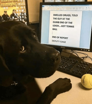 Police report: SMELLED DRUGS, TOLD  THE GUY AT THE  DUMB END OF THE  LEASH....GOT TENNIS  BALL  END OF REPORT  DEPUTY GAGE Police report