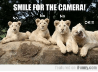 SMILE FOR THE CAMERA!  No  OK!!!  featured on iFunny.com The Purrfect Fucking Page